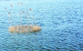 Ein Kranz aus geknicktem Schilfrohr treibt sanft übers Wasser. Die Grasenden gehen mit dem Wind. Die Blumen und Samen des Huflattichs begleiten den Kranz. Diese wurden von den Trauergäste in einer Zeremonie vorher hinein gegeben.